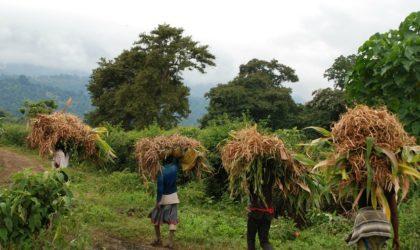 BAD : préconisations du Leadership4Agriculture