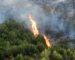 Plus de 320 000 ha de forêts détruits par les incendies entre 2008 et 2017