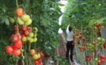 Les agriculteurs de Bouira marchent contre le système