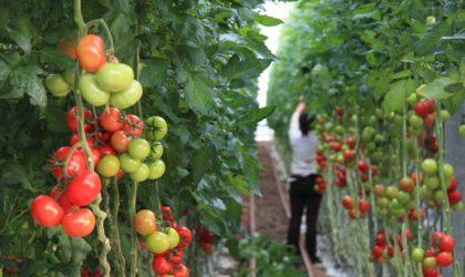 Les agriculteurs espagnols se mobilisent contre l'accord UE-Maroc