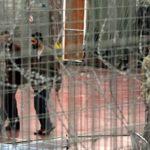 prisonniers Abbas