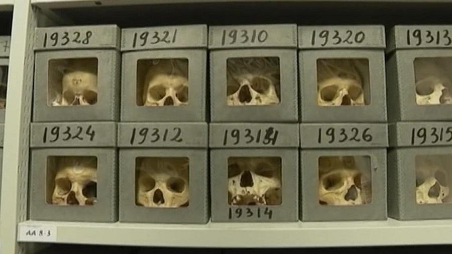France crânes