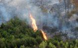 Tipaza : important incendie dans la forêt de Chenoua
