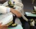 Réunion gouvernement-walis : Tebboune perpétue une tradition laissée par Bouteflika