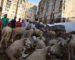 Sacrifice de l'Aïd : une fetwa à contre-courant des mesures barrières