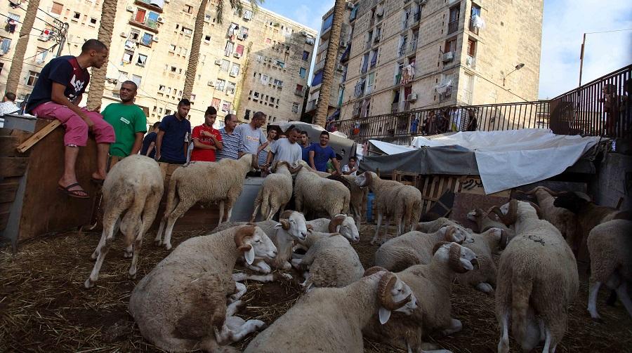 mouton Aïd