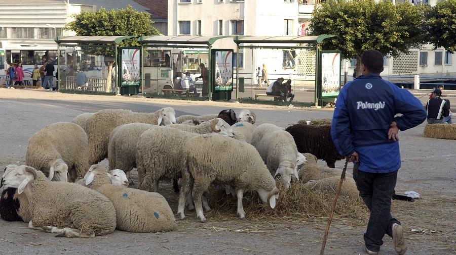 mouton sacrifice
