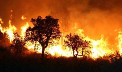 Les incendies de forêt commandités de l'étranger : la piste marocaine se précise