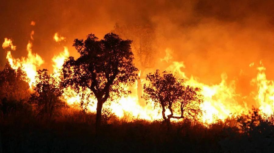 Tiapaza incendies de forêts