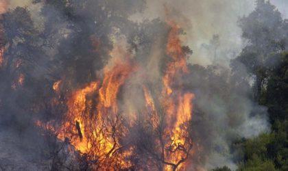 Incendies de forêts : dernier délai pour l'indemnisation des agriculteurs le 15 décembre prochain