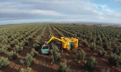 Laghouat : accompagner les exploitations oléicoles pour développer l'agriculture
