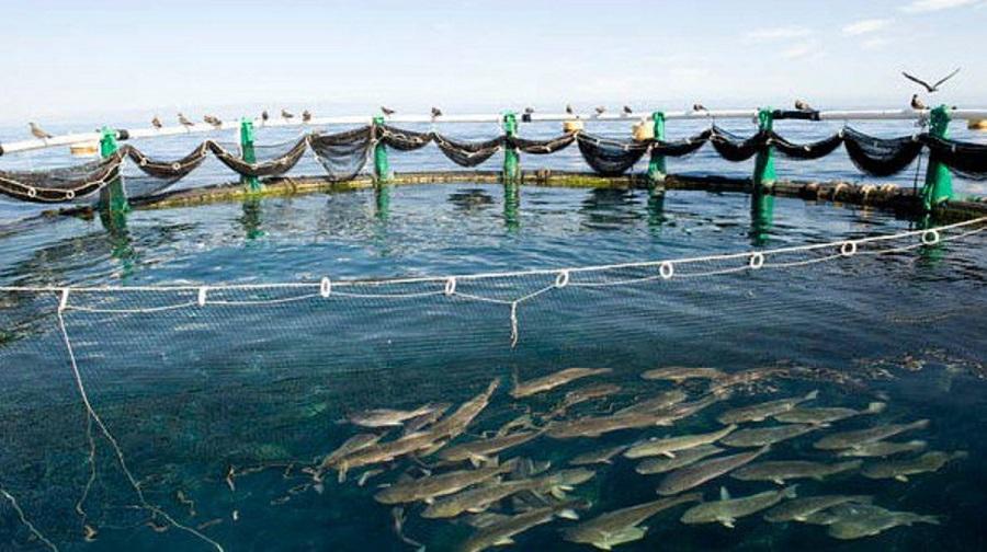 ferme productions halieutiques