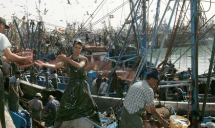 Le régime de Mohammed VI continue le pillage des richesses halieutiques du Sahara Occidental
