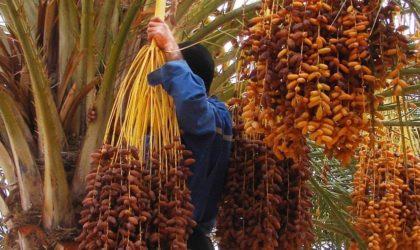 Les Marocains appellent au boycott de la datte algérienne suite à l'affaire d'Al-Arja