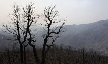 Appel à l'action «D'un cœur à l'autre» en faveur de la reconstruction de la Kabylie qui brûle