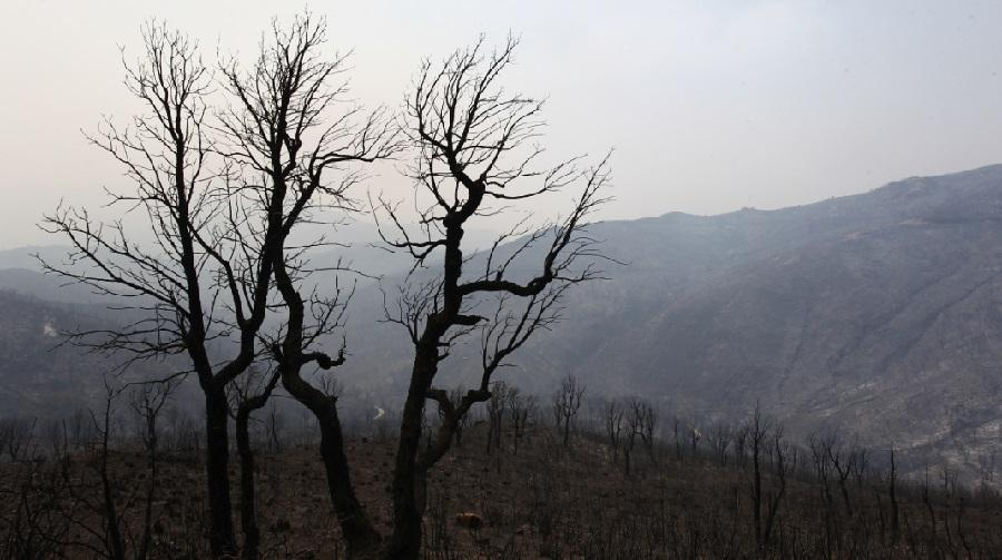 Kabylie feux